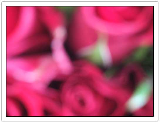 Out of focus roses (16kb)